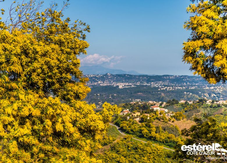 Randonnée : Le sentier du Mimosa – Vallon de la Gaillarde