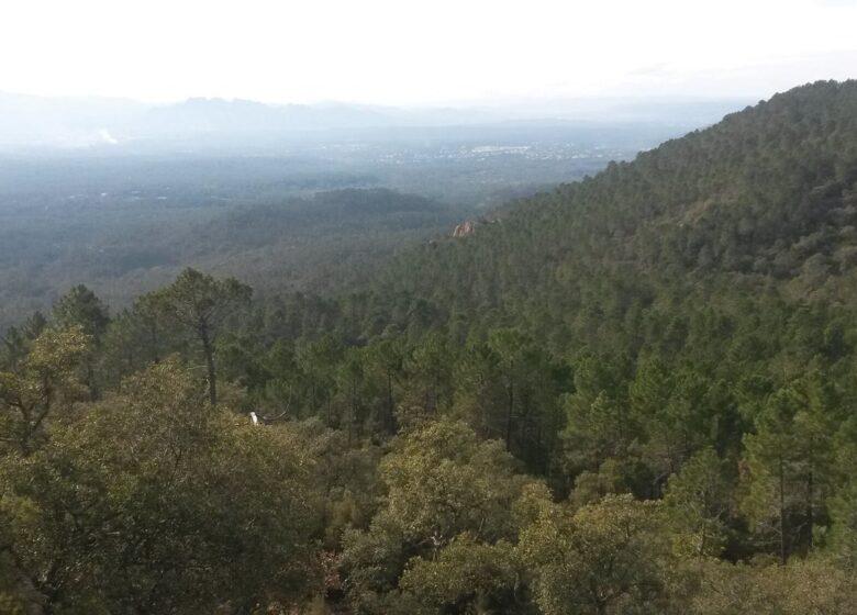 Trail : Trail des Mange Lamberts
