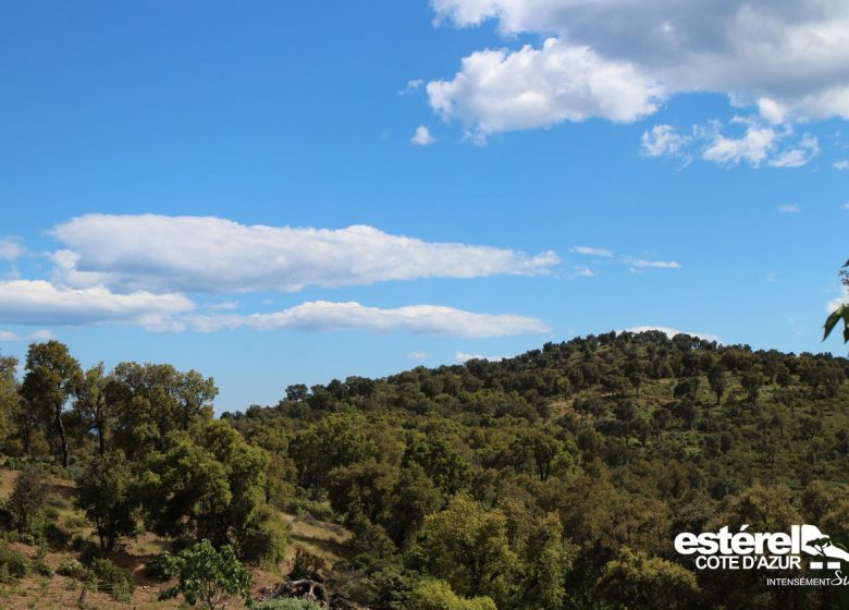 Randonnée : Le sentier de l'Agriotier – Vallon de la Gaillarde